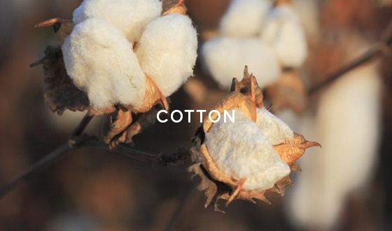Our Material - Cotton